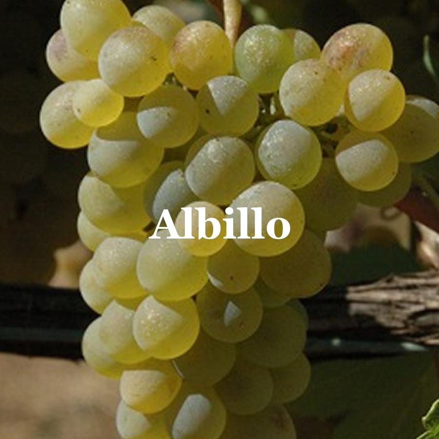 RB_ut_albillo