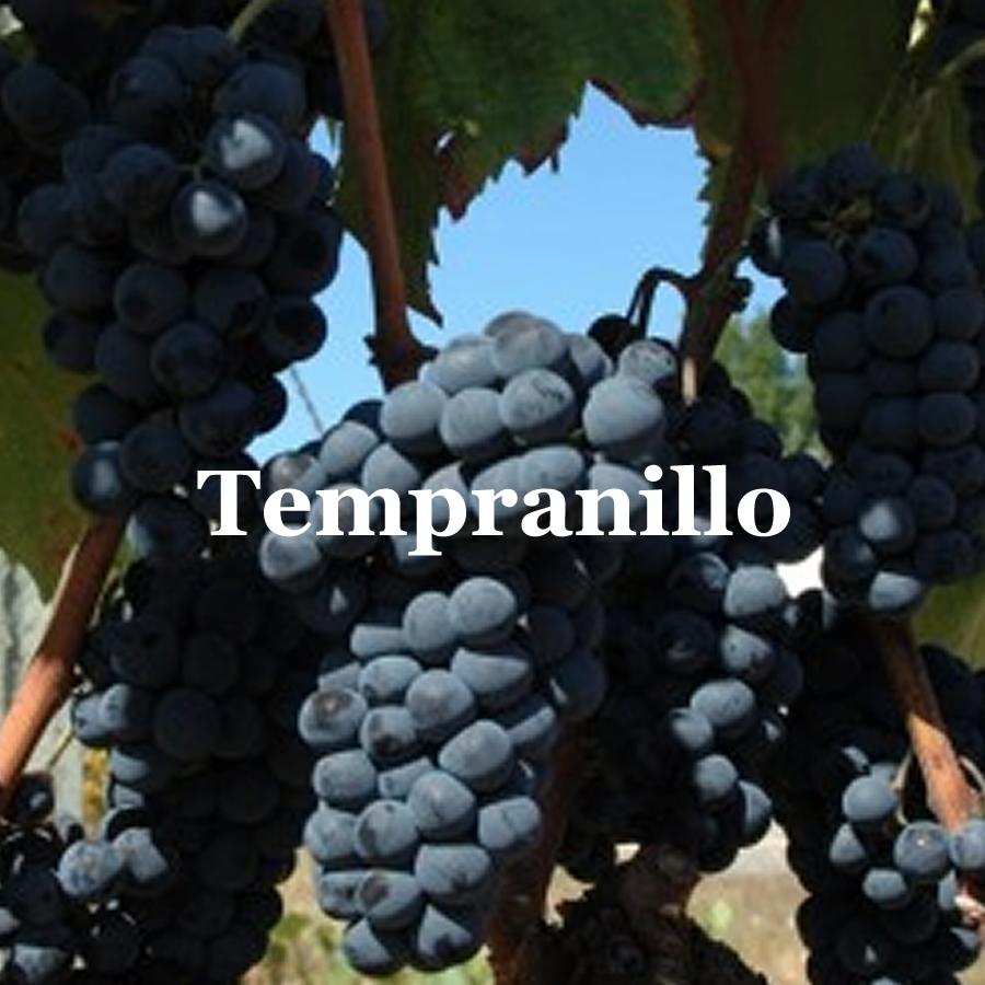 RB_ut_tempranillo